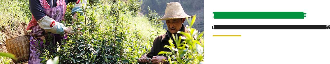 多年制茶经验技师纯手工制作